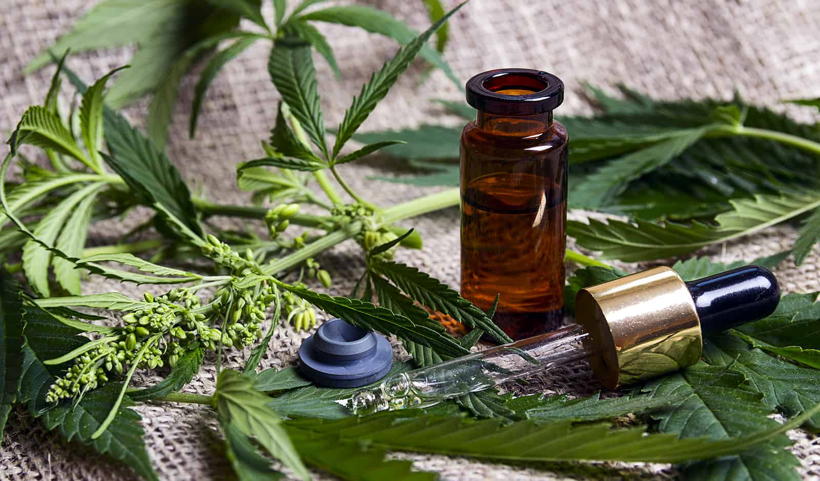 Should You Be Using CBD Oil for Pain Relief?