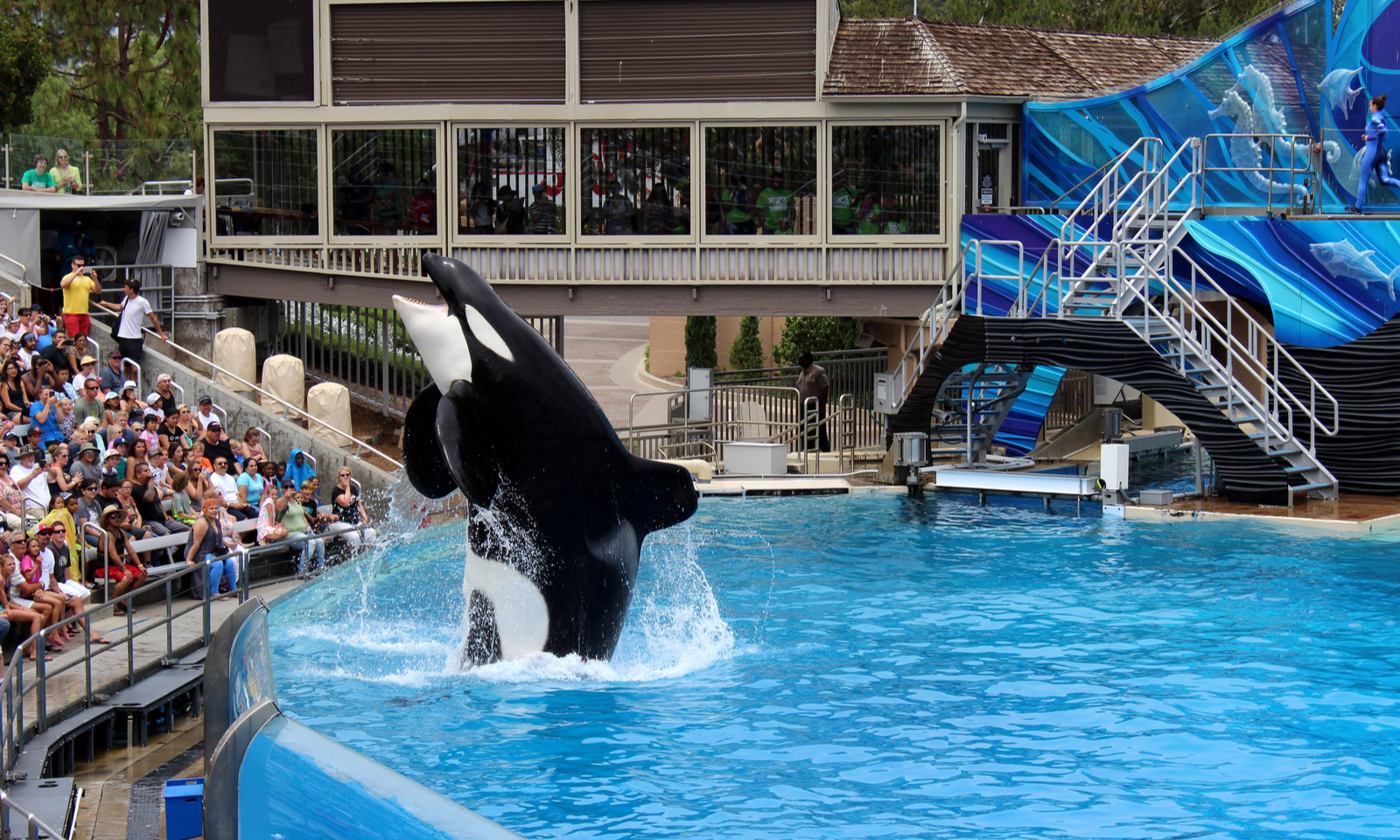 U.K. Travel Agency to Stop Offering Tickets to Attractions with Captive Killer Whales