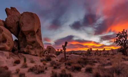 joshua-tree-main-image