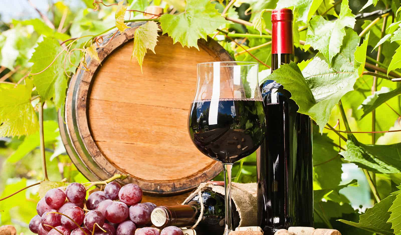 Innovative Tools for Wine Drinkers