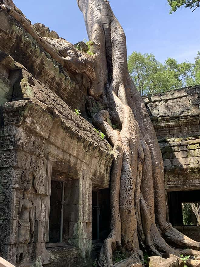 The-Top-Temples-to-See-in-Angkor-Ta-Prohm