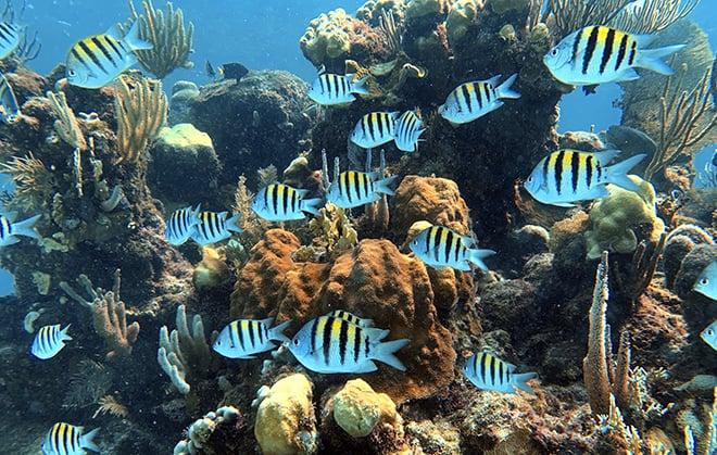 ibagari-boutique-hotel-duna-divers-main-image-scuba-diving-colorful-fish