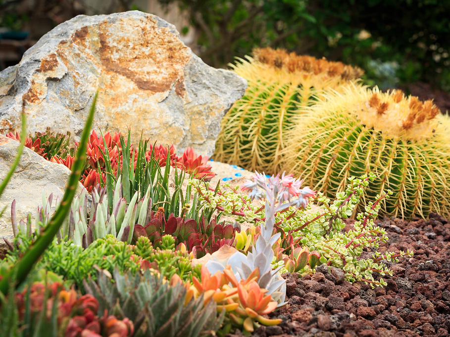 Lava rock and crushed rock for your succulent garden