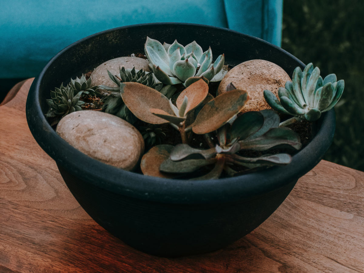 Mexican beach pebble mixed rock in succulent pot