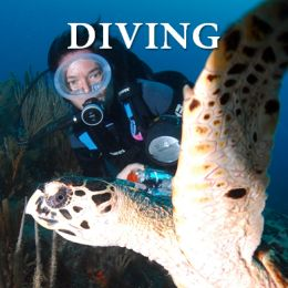 Cuan Law Scuba Diving